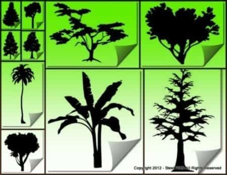 tree_collection2